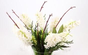 Cut flowers Aiolos