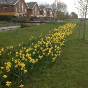 Park Vijfhuizen in bloei
