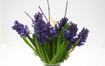 Cut flowers Midnight Queen